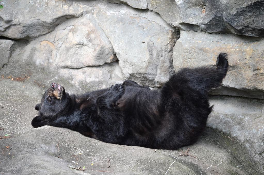 熊是一种怎样的存在?千万不要小看了熊