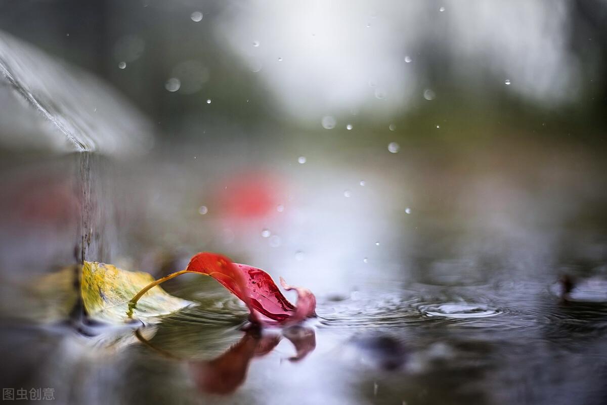 秋雨不断,温度骤降,加州鲈抗病力不容小视