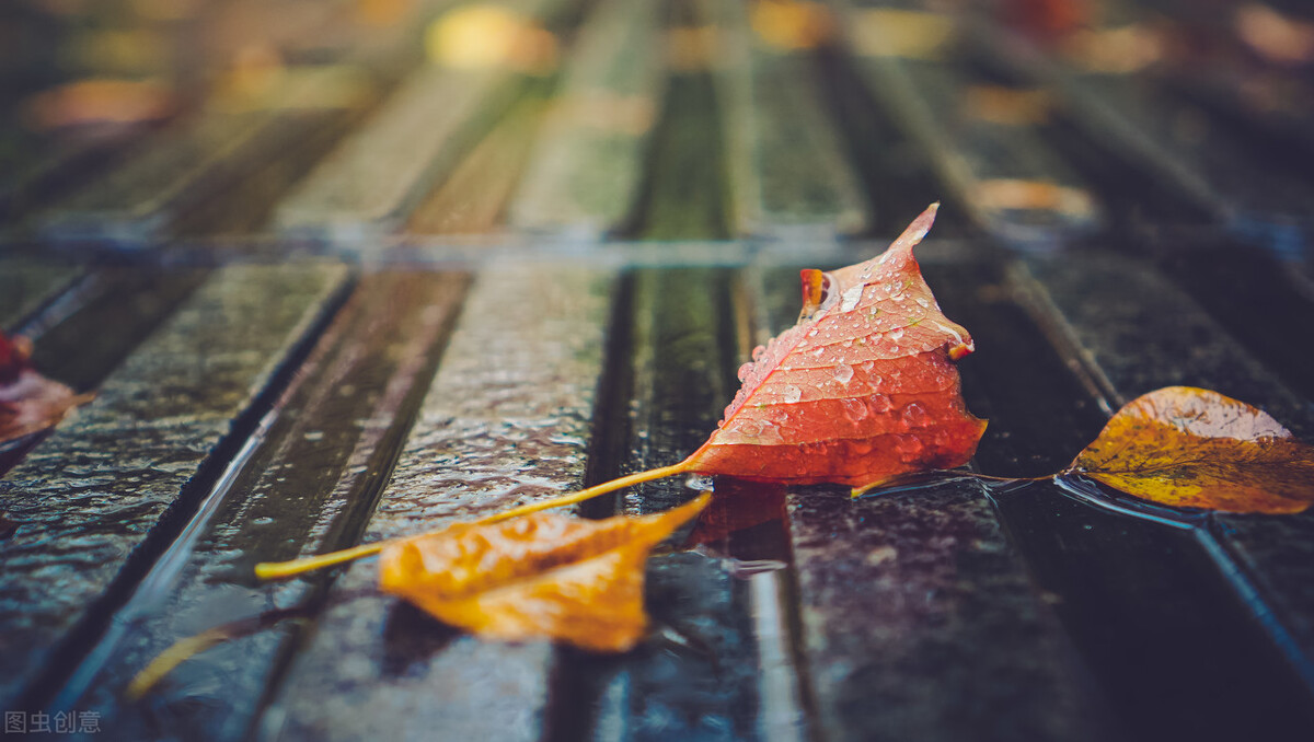 秋雨,那让人沉醉的滴答