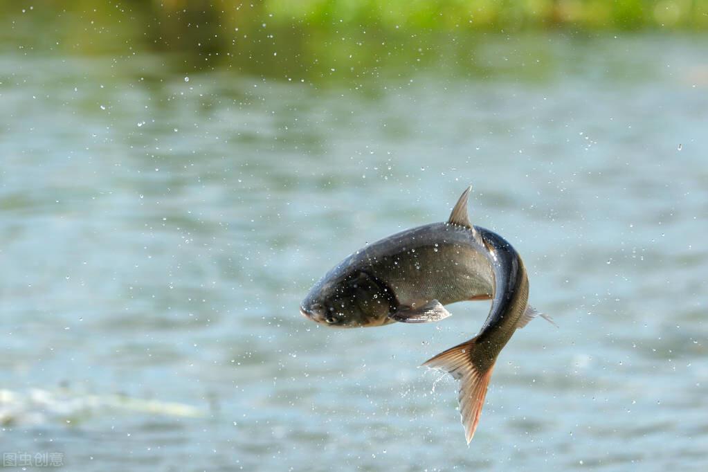 野钓,线组上的技艺,这五个线组上的秘密,将决定你的鱼获。