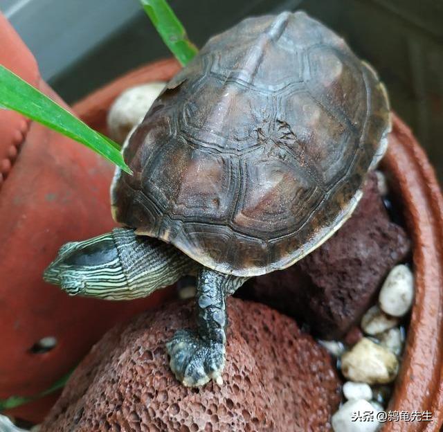 想要養好烏龜,不可不知的烏龜四時溫度規律