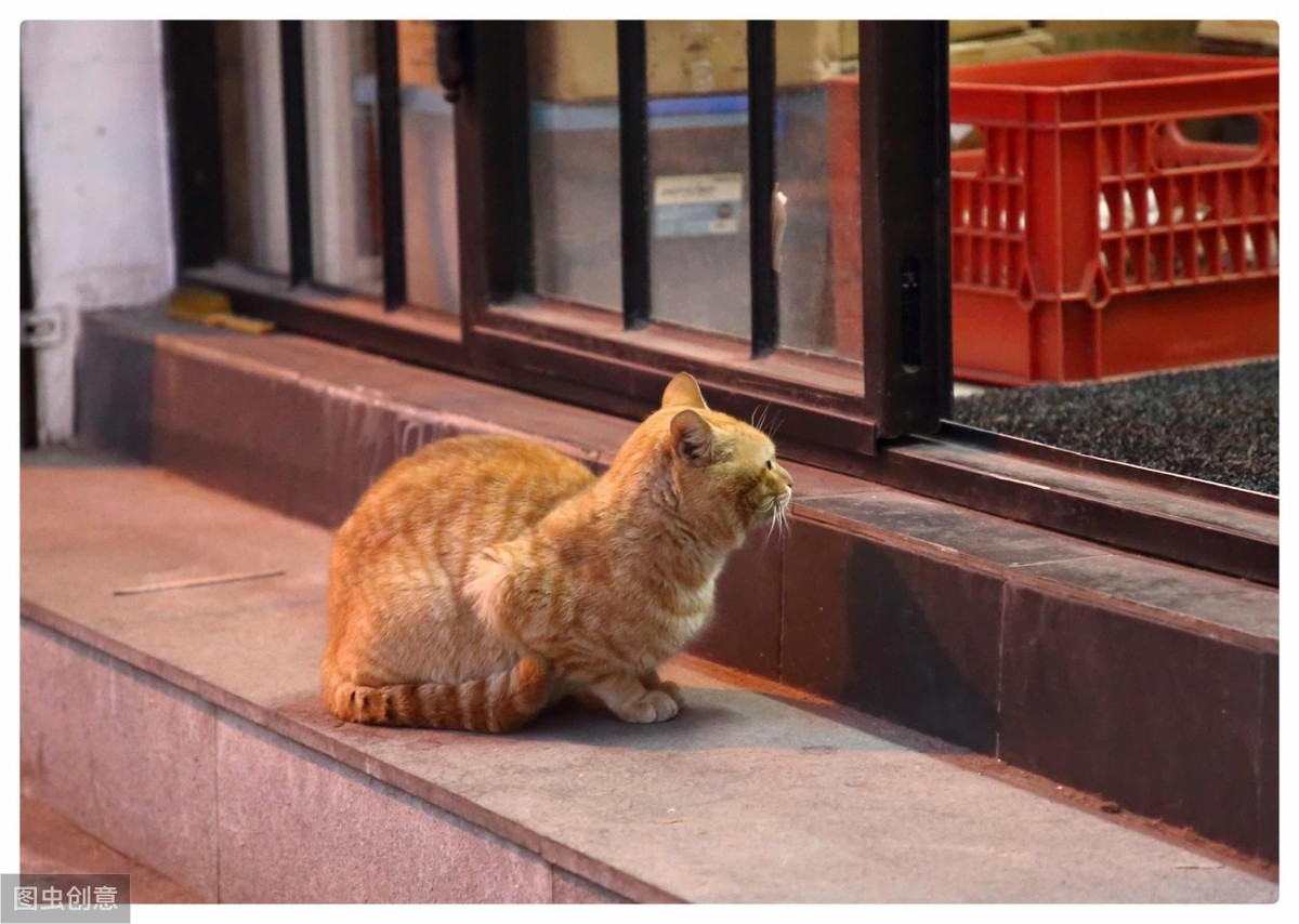 闢謠:貓咪等主人回家,是忠誠的表現? 可能是你想太多了