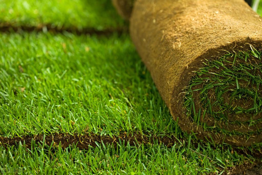 農村種植草皮前景可觀,草坪經濟的管理技術你知道多少?