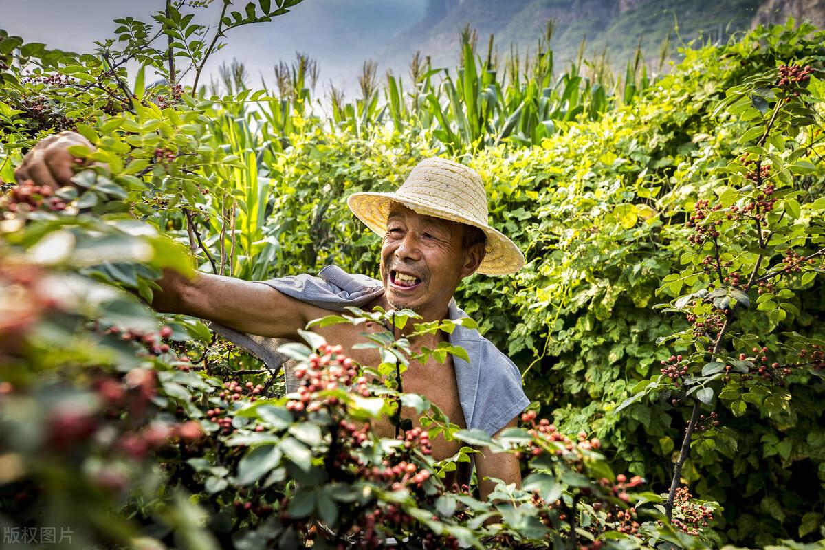 农业农村部发布:2021年农业补贴再增多,种地有盼头了