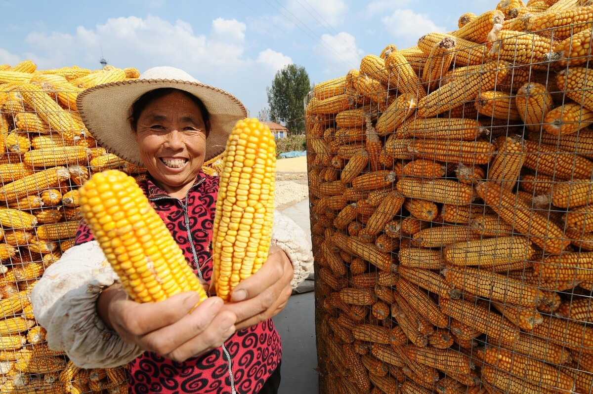 玉米继续涨,突破1.45高位,涨价原因已确定,2个坏消息来袭