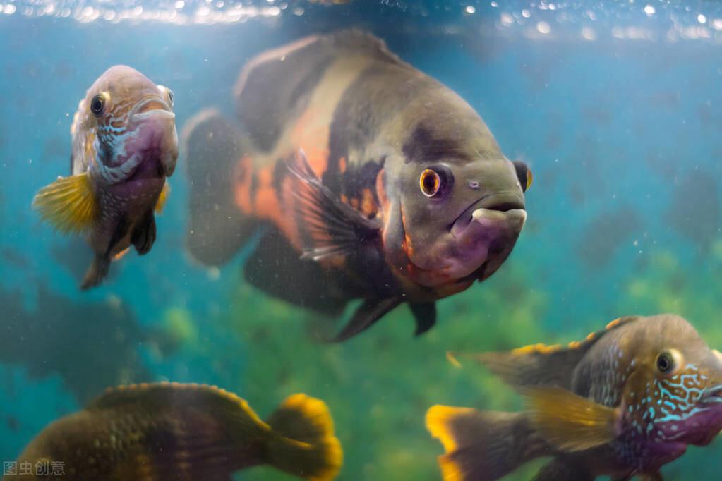 新手饲养观赏鱼的几大误区,避开即可升级
