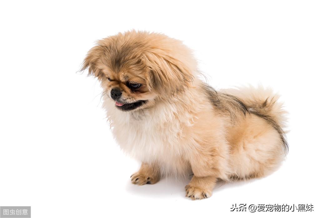 犬尿路結石是什麽?該如何診斷治療?</section>  </section>  <div class=