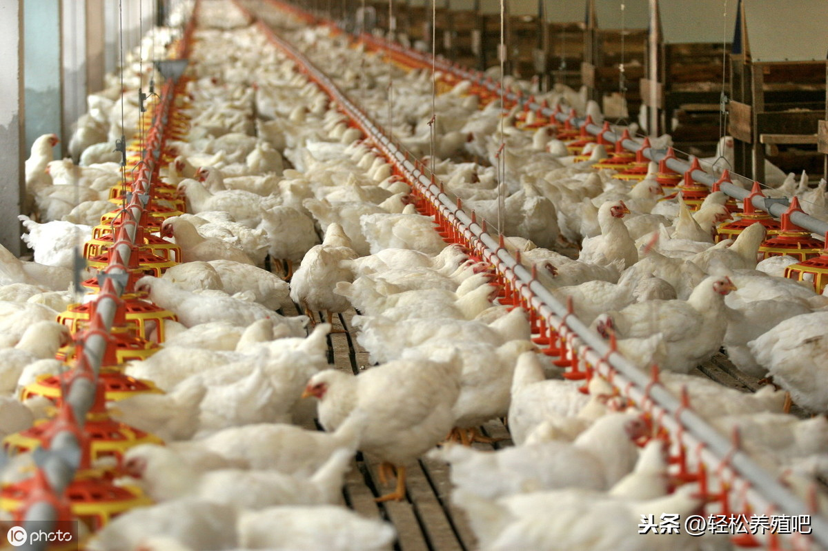 如果想要加入养殖业,这些基础知识必须要了解 养殖业疾病防治 第4张