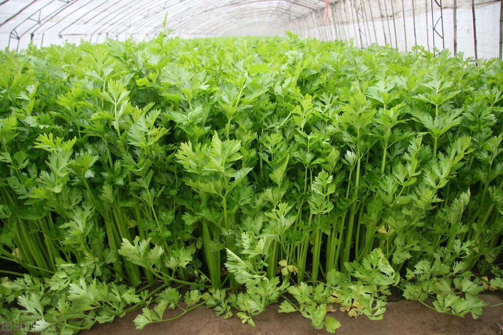 温室种植小知识之农作物的主要成分有哪一些