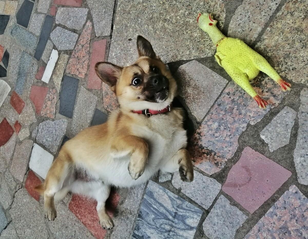 """狗知道自己是狗吗?这些行为简直把自己当""""人""""了"""