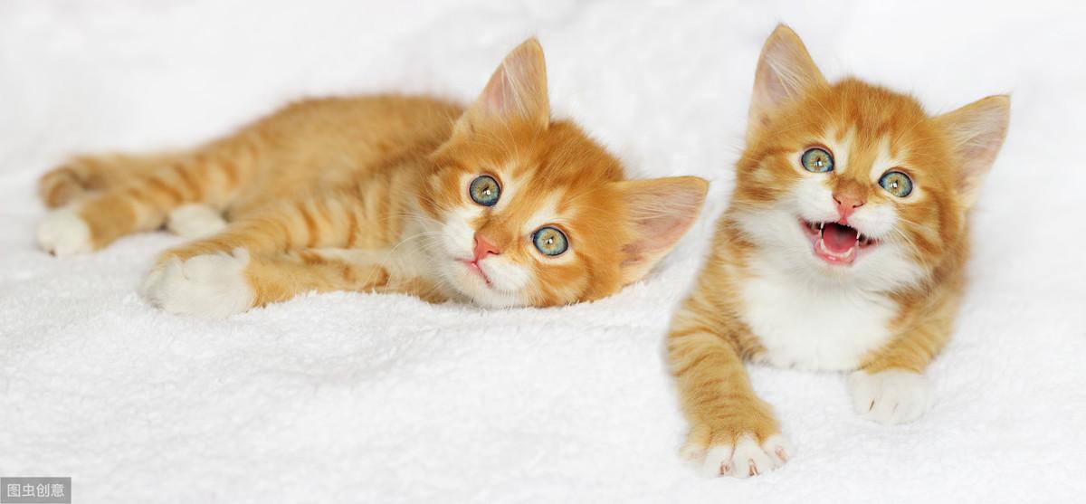 能发出100种叫声的猫咪,到底在说什么?一文教你读懂猫语