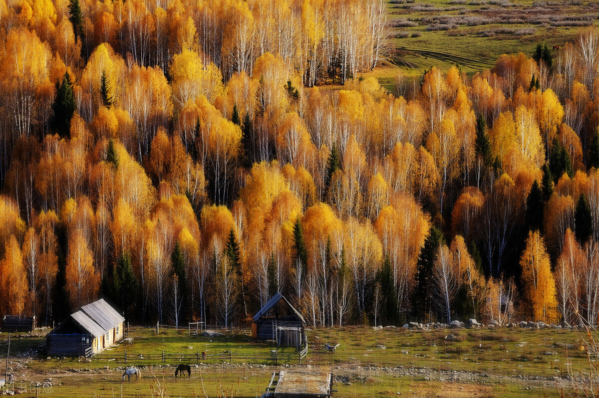 距离北京不过300公里,一路向北,自驾或骑行寻找最绚烂的秋色