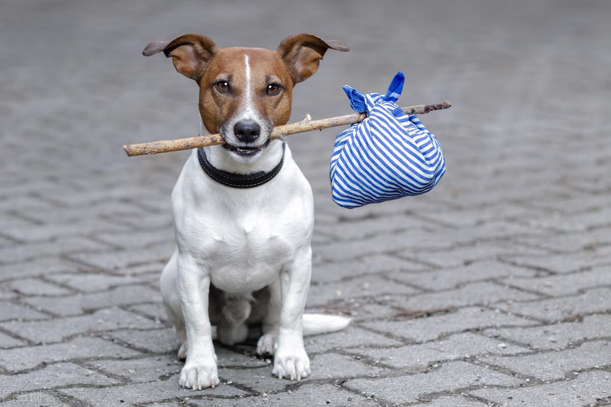 狗有这5种行为,说明它已经讨厌你了