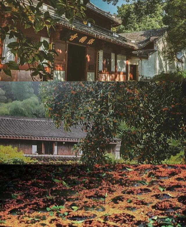 宁波赏秋攻略,这有桂香阵阵的千年古刹,更有漫山红枫绝美秋景