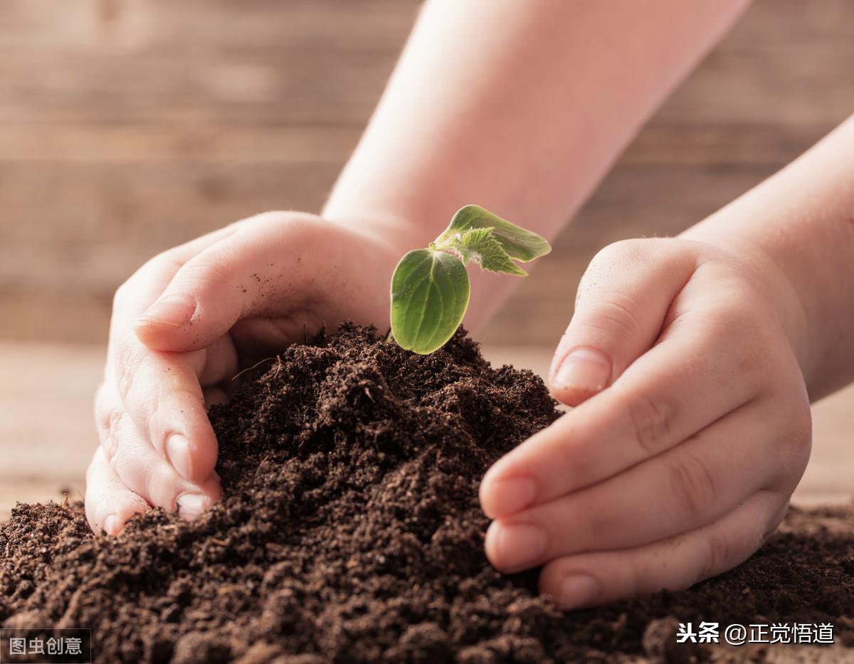 保护动物 爱护环境 节约用水用电 节约粮食 节能减排 低碳出行 节约省钱 第1张