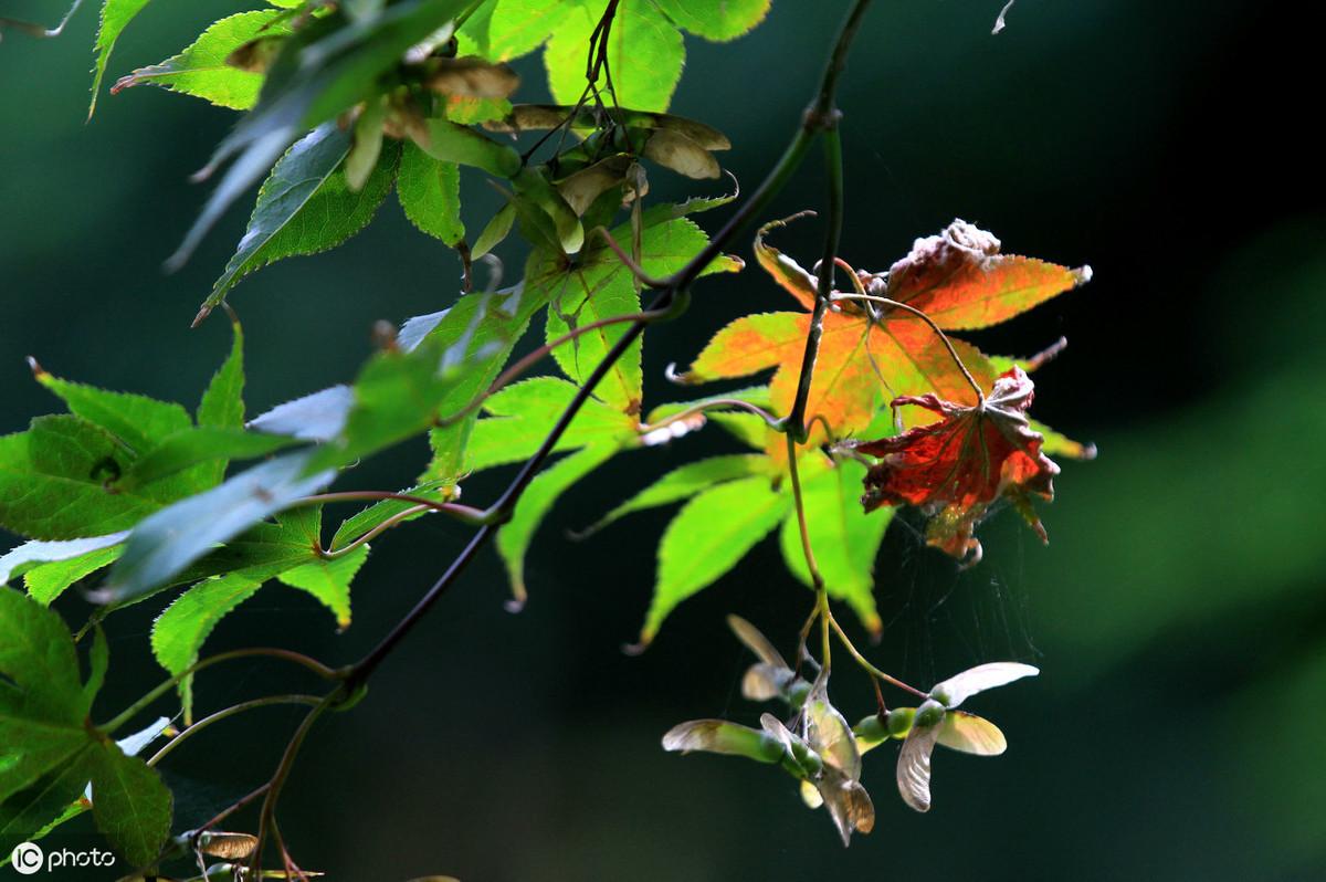 那些经典的描写秋天的诗词句,你知道几句?-第4张图片-诗句网