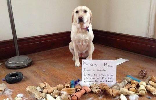 狗狗为什么要藏东西?出于本能,但也和之前吃不饱的生活有关