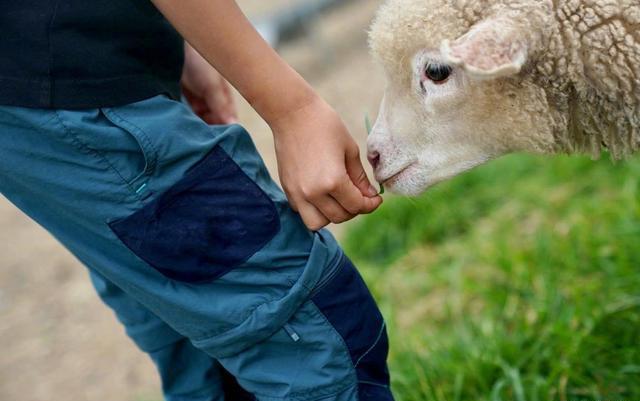 刘若英带儿子喂羊,母子戴牛仔帽子太飒,小家伙身高飞涨认真干活