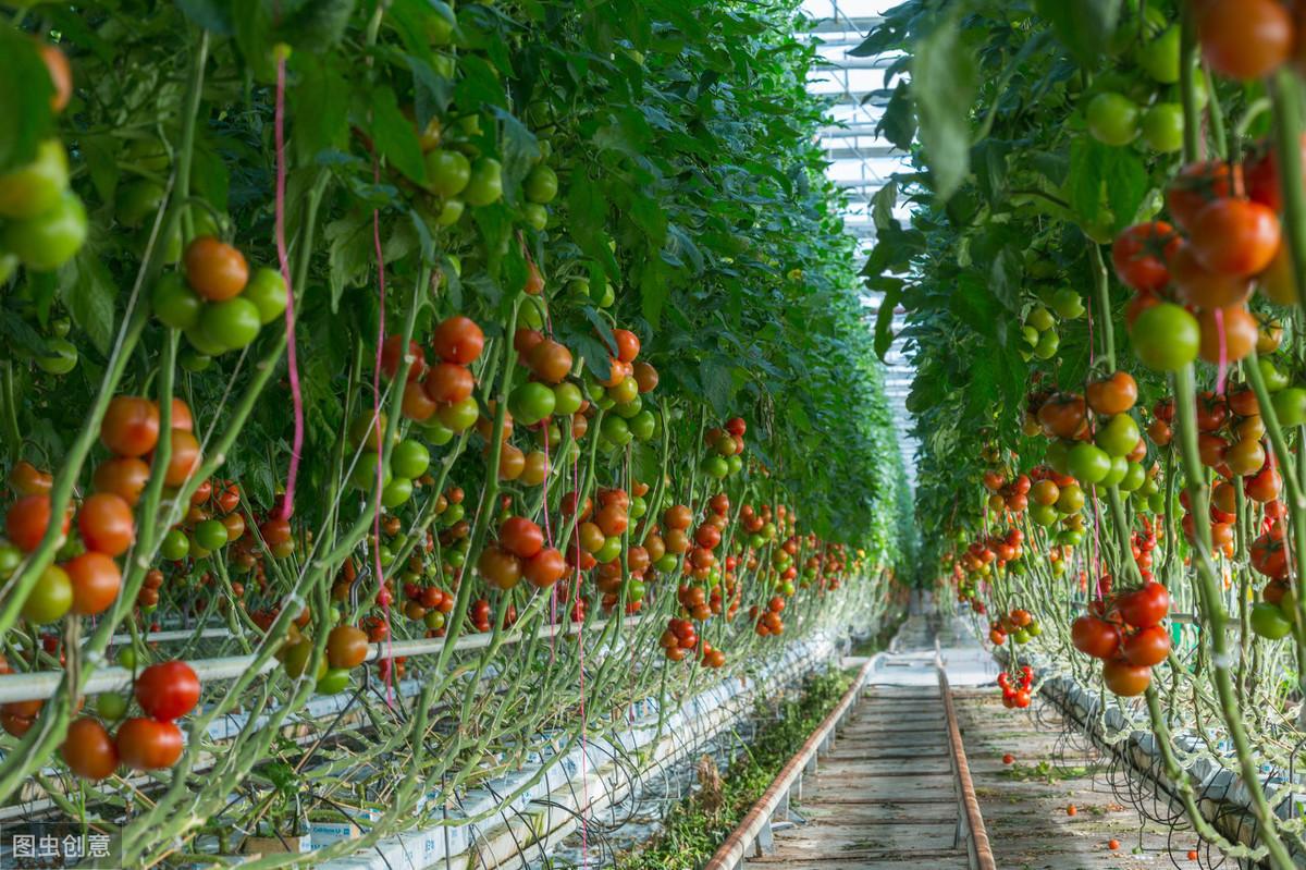 做现代设施农业常见的模式有哪些?现代设施农业如何发展建造