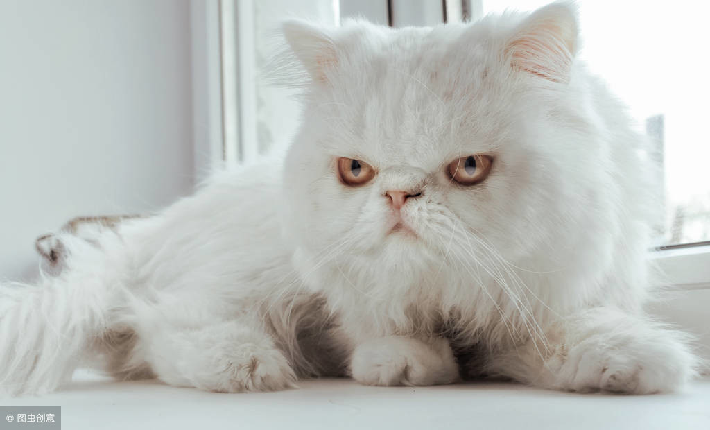 猫对主人感到失望,5种表现说明猫在生你气,母猫对人类更宽容
