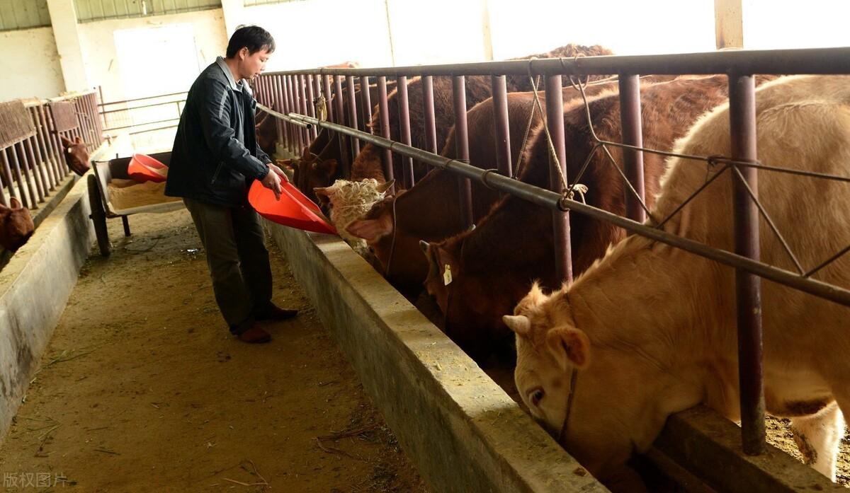 牛羊瘤胃宝使用的3大注意事项