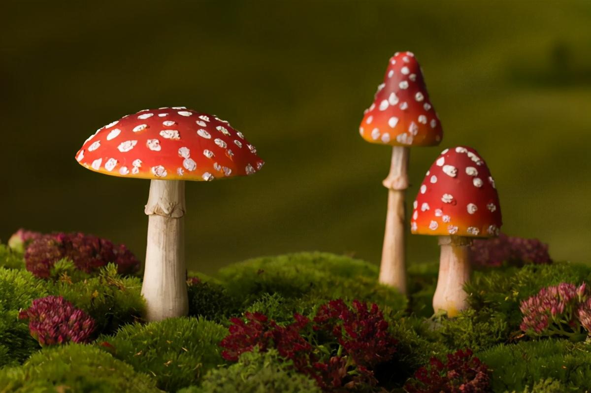 佳肴还是毒药?民间蘑菇鉴别法并不可靠