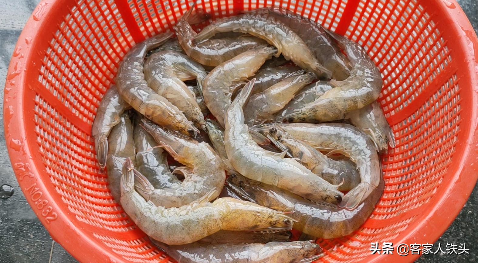 大蝦這樣做待客最有面,蓋一蓋5分鐘出鍋,鮮香好吃,汁都吃不剩