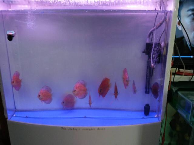 关于鱼缸滤棉到底应该多久清洗的问题,一定会牵扯到以下要素
