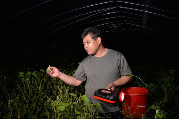 小豆虫 大产业 沂南桃花埠村党支部积极发展豆虫养殖 引领乡村振兴