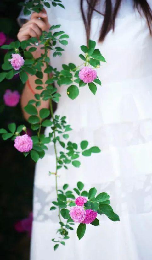 人间最美是相思 几首情词 几首情诗-第8张图片-诗句网