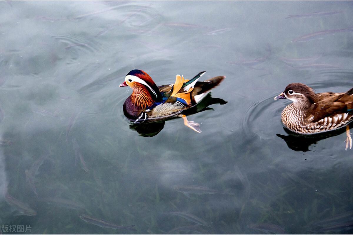 西湖有哪三绝,成就了杭州浪漫爱情之都的主色调?