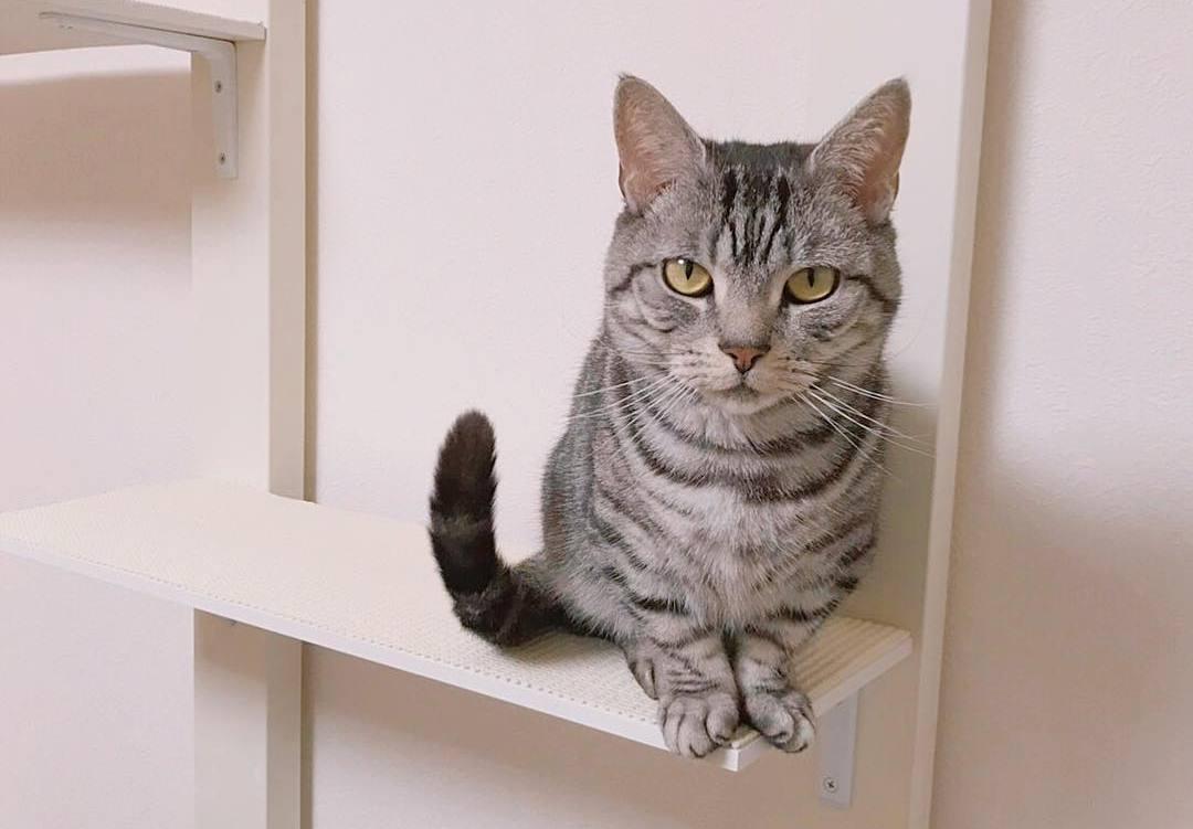 过来人的心里话:新手养猫一定要考虑这两个问题,别盲目养猫