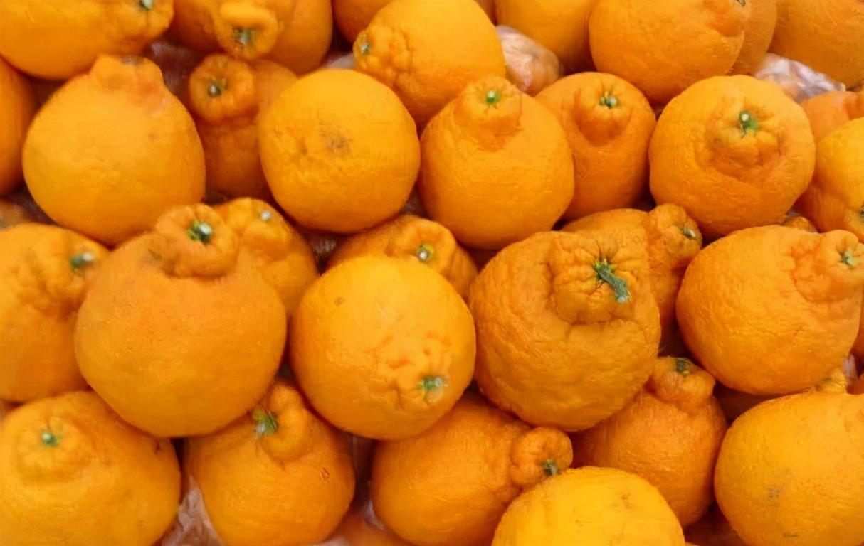 買醜橘,硬的軟的哪種好? 教您4招挑選技巧,容易買到香甜多汁的