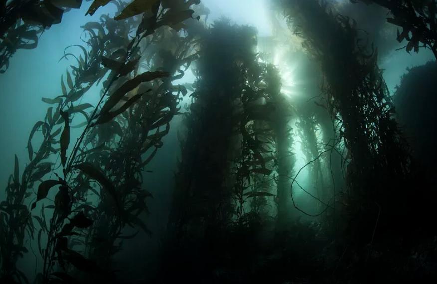 為什么越來越多人看好藍晶海藻纖維?