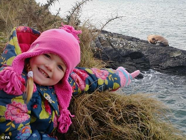 北极海象迷路到爱尔兰,绕着海岸流浪4000公里,到现在还没回家