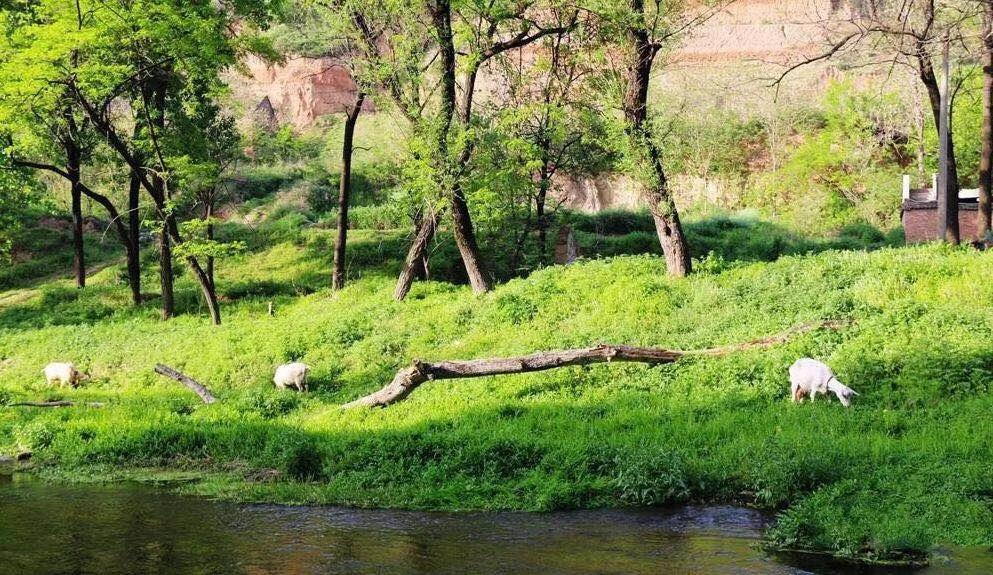 长安地理:滈河从王曲缠绵流过(文/王志安 诵读/杨扬)