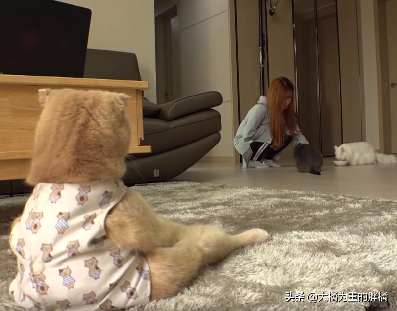猫咪喜欢坐着看电视,吃饭喝水还得主人送到它面前,生活真惬意啊