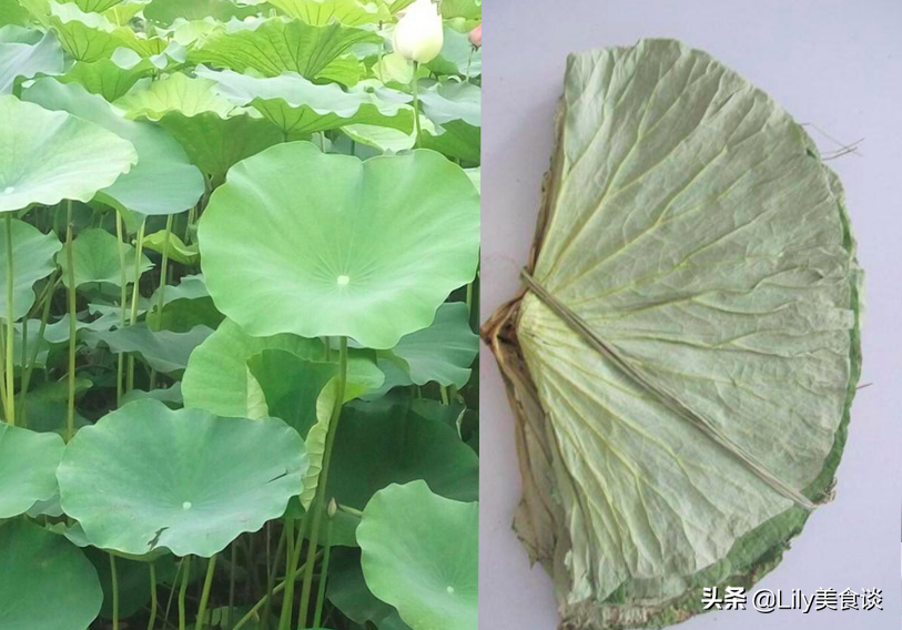 """端午节包粽子,农村这7种""""叶子""""都能包,自带独特清香,收藏好"""
