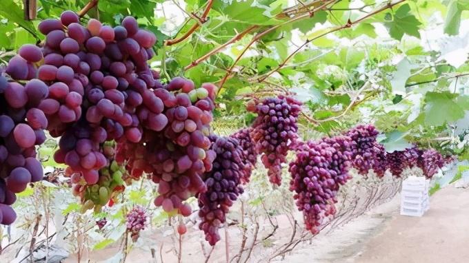 """俗话说的好""""秋吃果"""",入秋之后多吃6种水果,对身体好"""