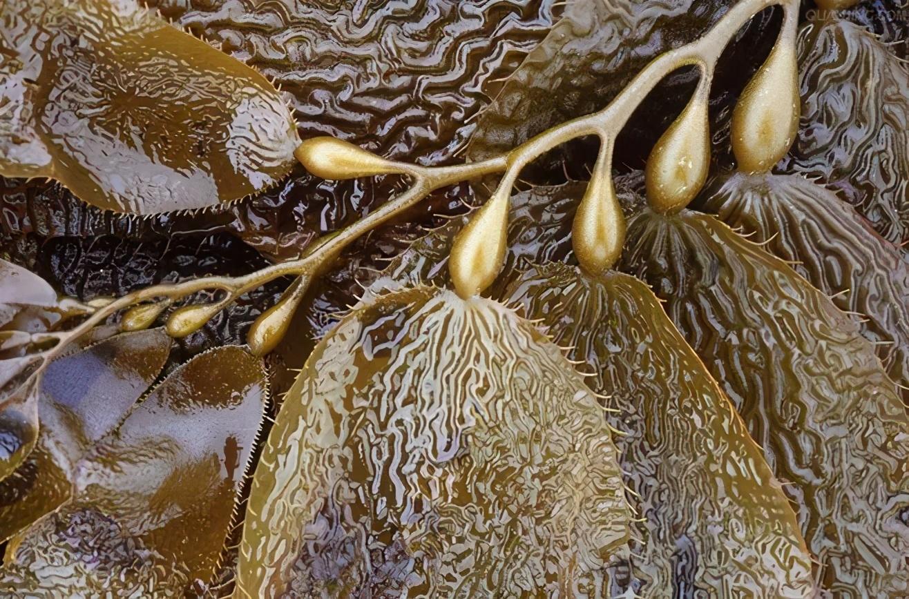 藍晶海藻纖維內褲,今夏男人新寵兒