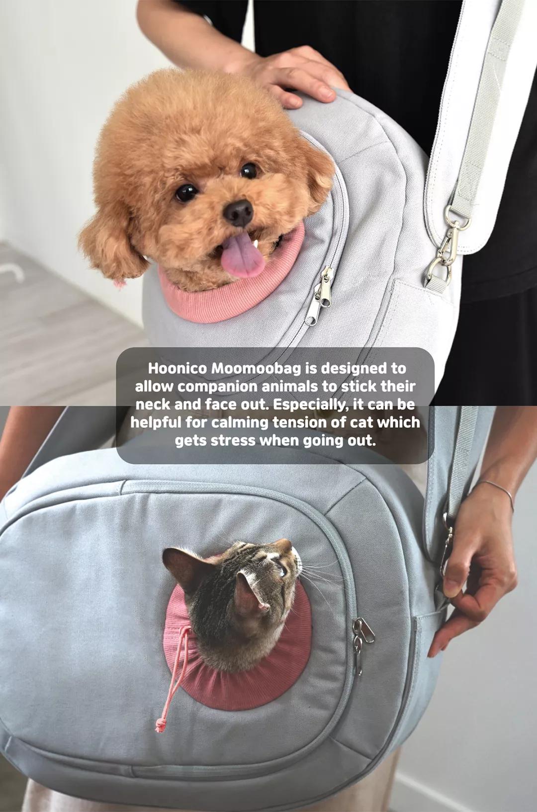 想带宠物去旅行吗?点开有惊喜