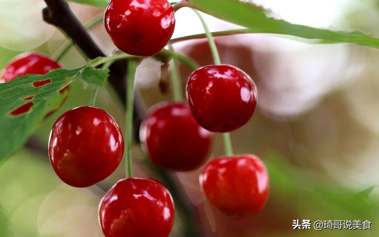 春末夏初,这4种水果正当季,泡酒做甜品都不错,应季而食身体棒
