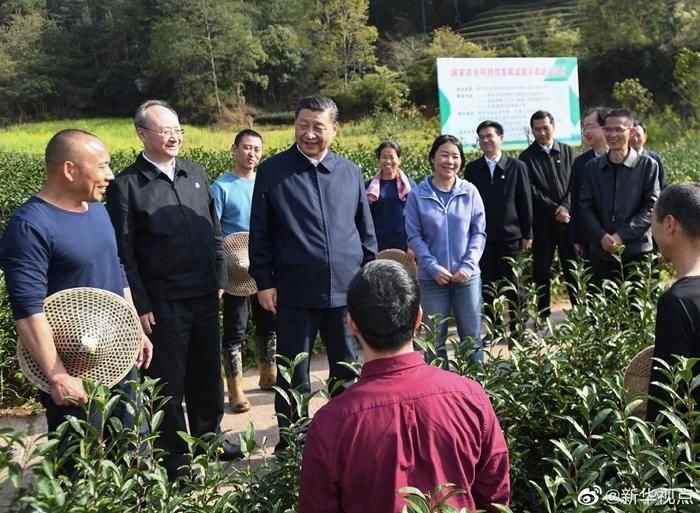 习近平察看武夷山春茶长势:把茶文化、茶产业、茶科技