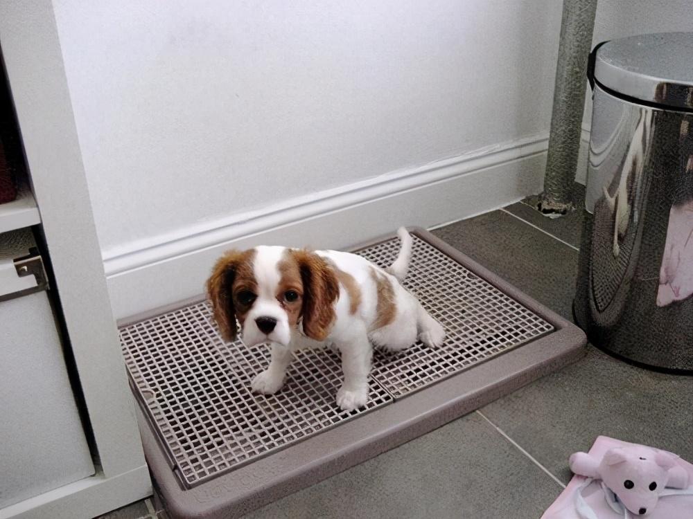 15个狗狗怪异行为:看你上厕所,私藏东西,你家狗中了几个