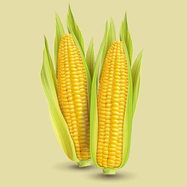 生活小常识:玉米棒子插水里,7天冒出小森林 生活小常识 第1张