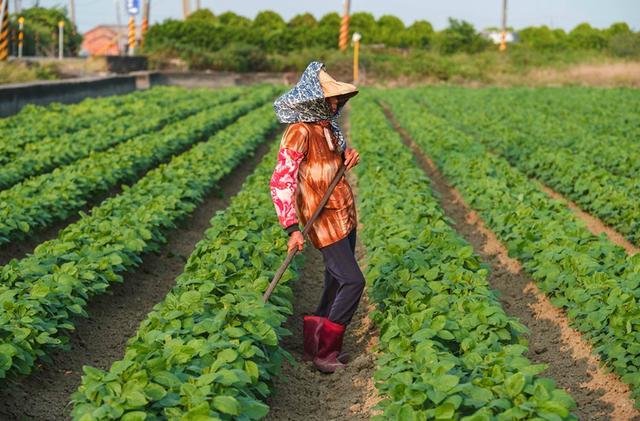 土壤修复科学施肥,健康耕层构建的关键