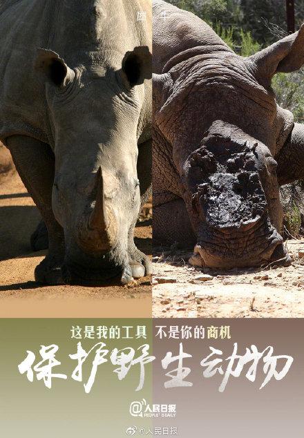 2020世界动物日:没有买卖 就没有杀害
