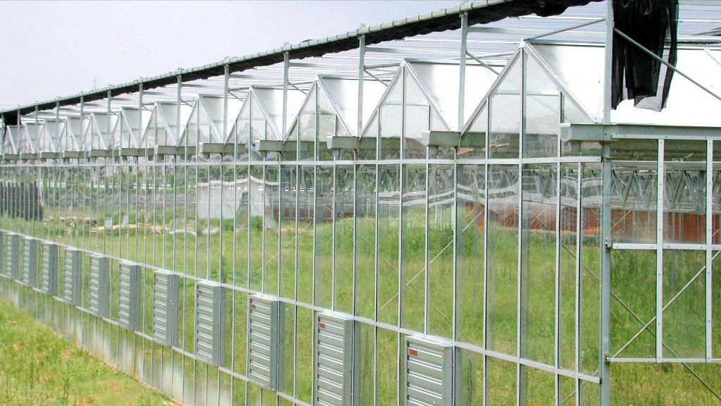 智能玻璃温室大棚的实际应用效果和种植效益显而易见