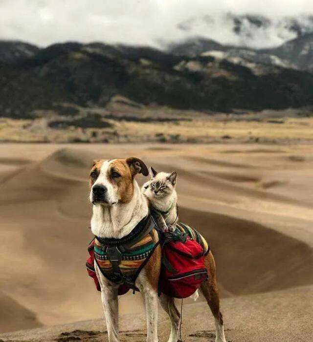 這是什麼神仙組合啊!一貓一狗走天涯,完美詮釋旅行的意義