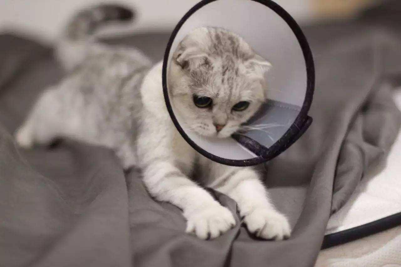 带你了解更多关于猫咪绝育的利弊